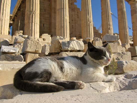 our neutering trip to greece briarhill veterinary clinic